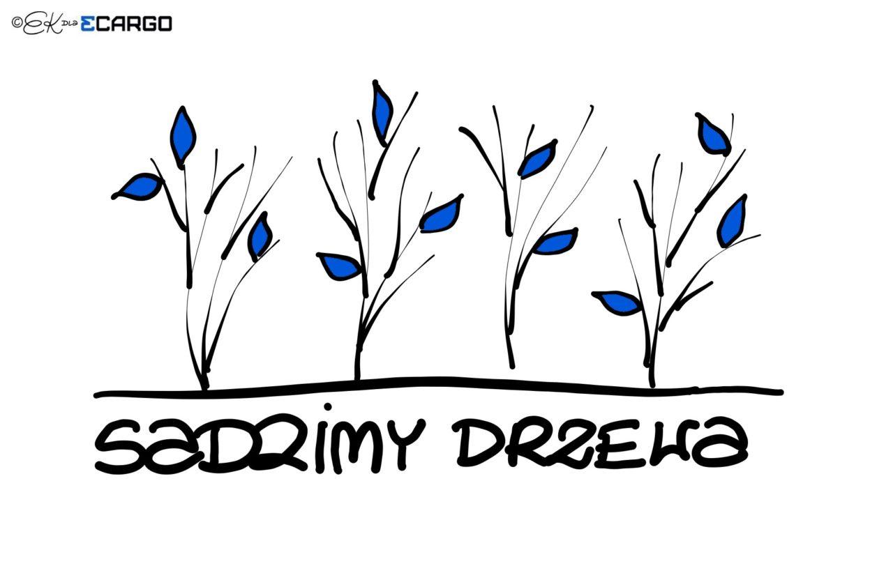 sadzimy-drzewa-1280x812.jpg